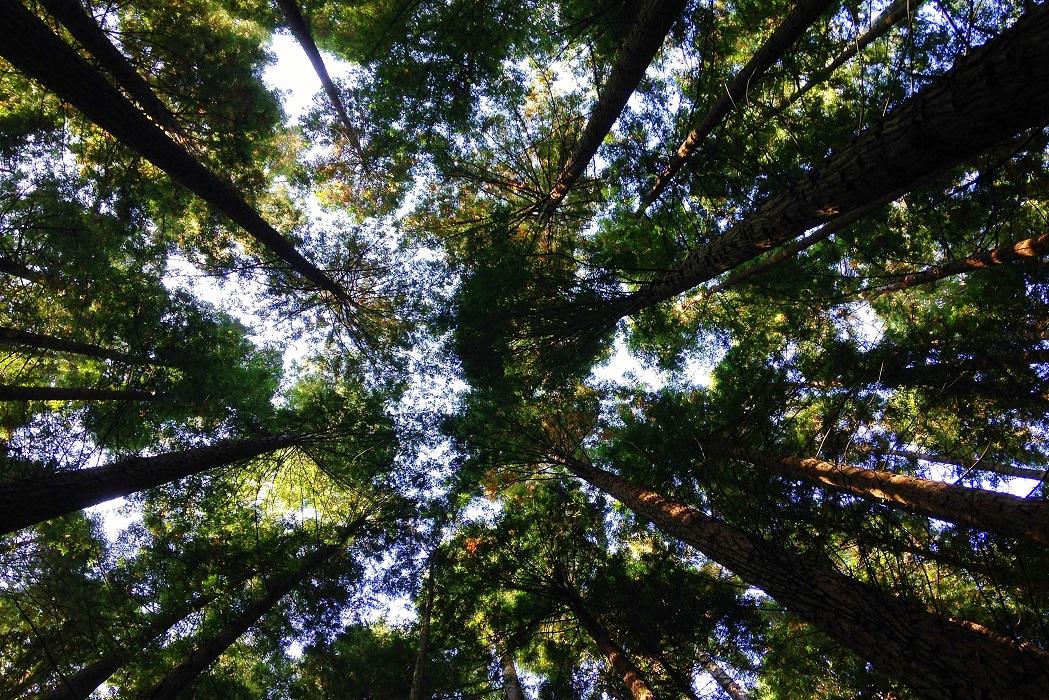 Día Mundial del Medio Ambiente: ¡preservar la biodiversidad es esencial!