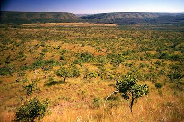 Dia do Cerrado: programa leva esperança aos produtores rurais do bioma