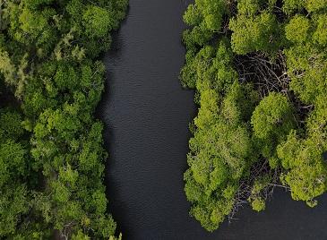 Amazônia: governos locais discutem proteção da floresta e desenvolvimento sustentável