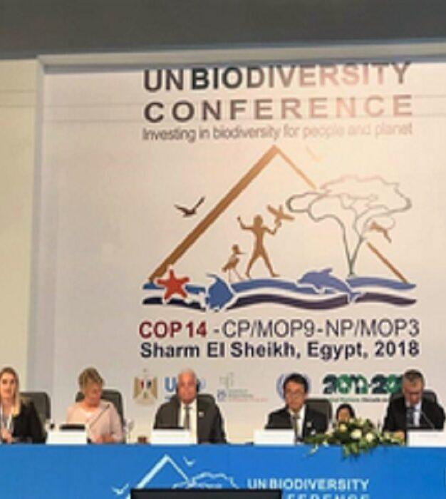 Urgência de ação multinível para conter a perda da biodiversidade é o apelo do Comunicado de Sharm El-Sheikh
