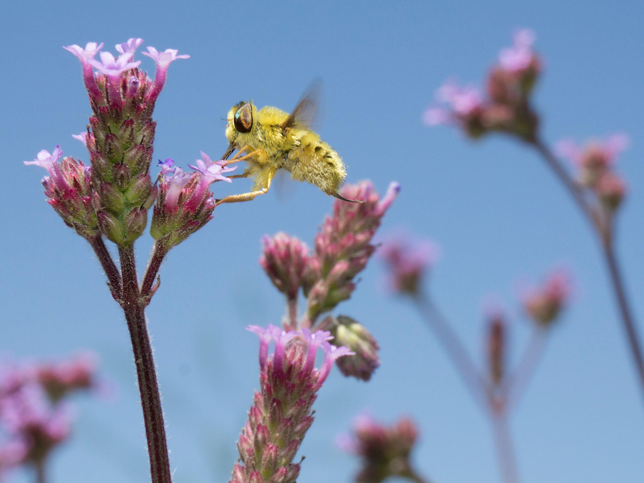 Por que precisamos somar esforços e garantir um Novo Marco Global para Biodiversidade realmente ambicioso?