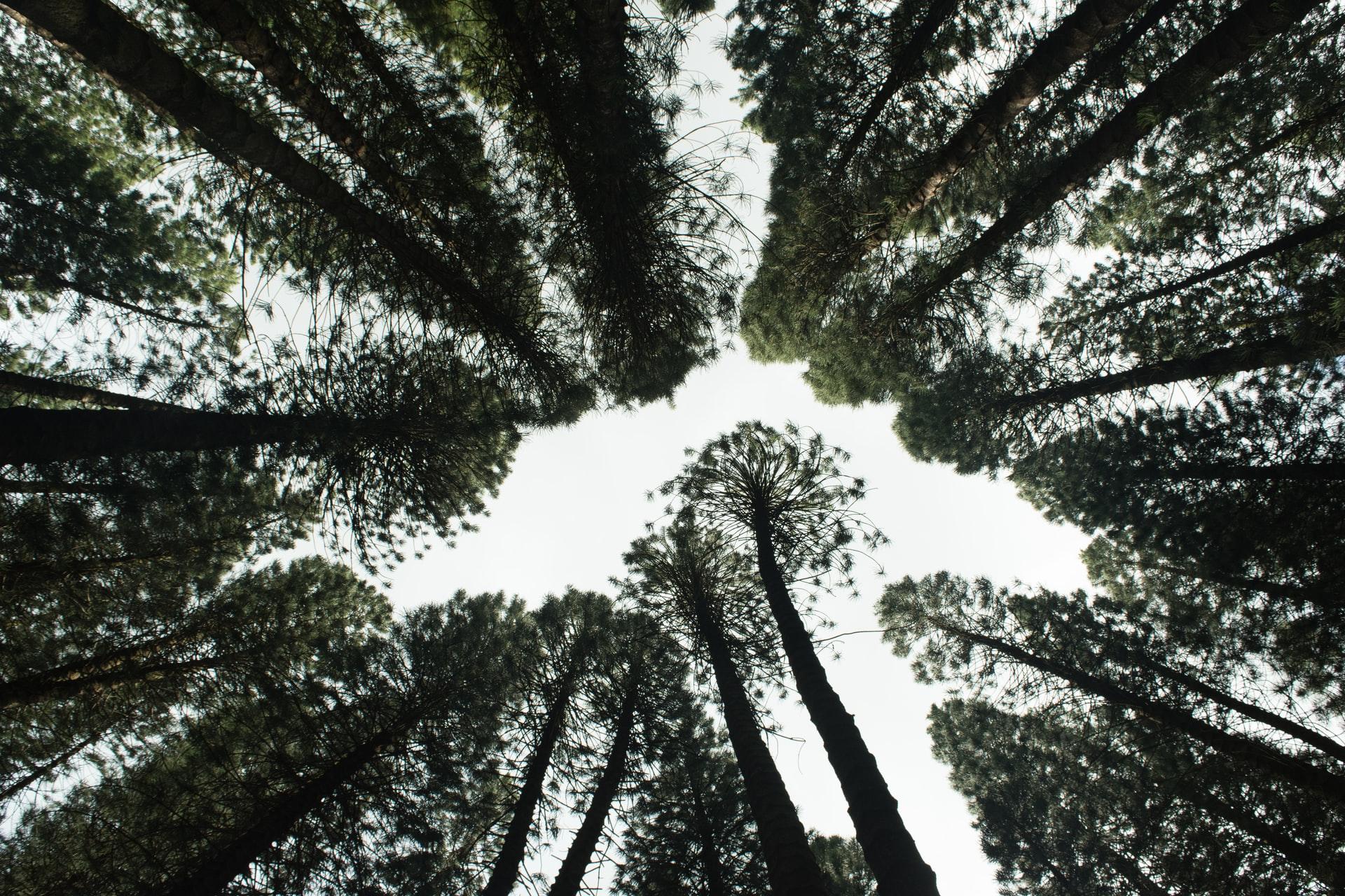 Brasil passa a integrar o Protocolo de Nagoya sobre biodiversidade