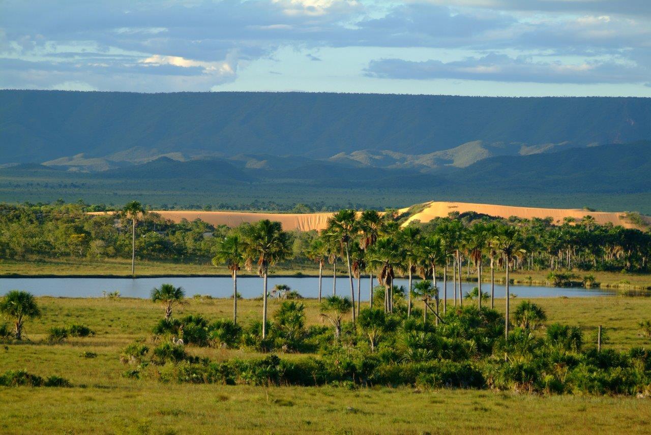O papel dos governos locais na preservação da biodiversidade