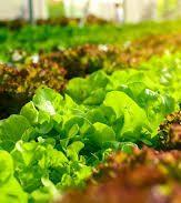 Edital do LUPPA irá apoiar governos locais na construção de políticas públicas para sistemas alimentares urbanos