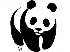 IV Webinar New Deal: Soluções baseadas na Natureza.